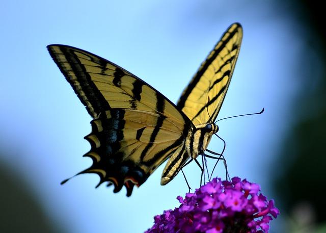 butterfly-2144506_640