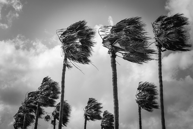 palm-trees-4069748_640